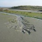 Developing Saltmarsh Channel
