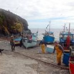 Fishing Boats at Cadgwith