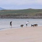 Exercising the dogs on White Strand