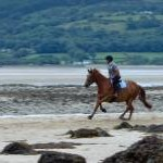 Equestrian exercise, Red Wharf Bay