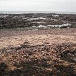 Beach, east of Arbroath