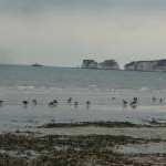 Studland Beach : Birds & Headland