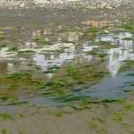 Shanklin Beach Photos Uk Beach Guide