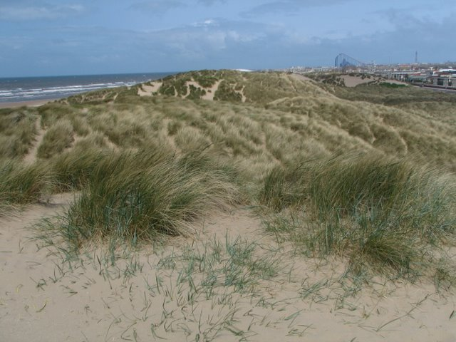 Nudist Beaches In South Wales