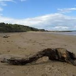 Driftwood on Gullane beach