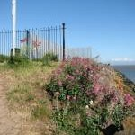 Valerian at the Lifeboat Station