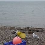 Beer: buoys and gulls on the beach