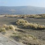 Mini dunes at Barmouth