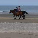 Horse riders on Red Wharf Bay
