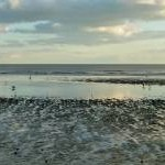 Low tide on the beach, Bexhill