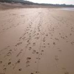 Winter footprints on Constantine Bay