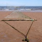 Fishing net on Lunan Bay beach
