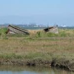 Sinking into the Saltmarsh, Wrabness