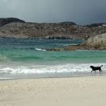 Dog on Achmelvich Beach