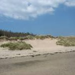 Sand dunes and forest at Tywyn Bryn-y-Bar