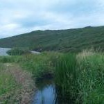 Cors dan gysgod traeth carregog / A wetland sheltered by a pebbled beach