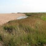 Marsh bordering on shingle