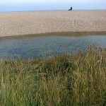 Shingle beach at Cley Eye