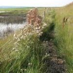 Footpath to Cley Eye car park